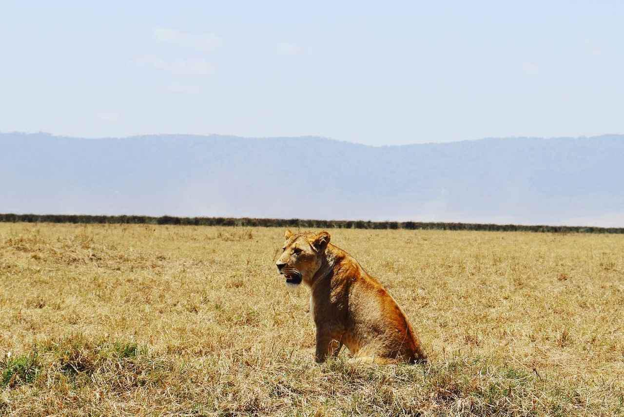 画像: 【ケニア・タンザニア・ボツワナ】サファリの魅力をご紹介します! - クラブログ ~スタッフブログ~|クラブツーリズム