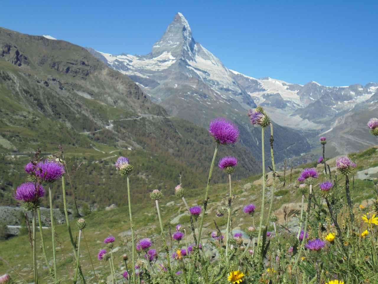 画像: マッターホルンと色とりどりの高山植物(弊社スタッフ撮影※諸条件によりご覧いただけない場合があります)