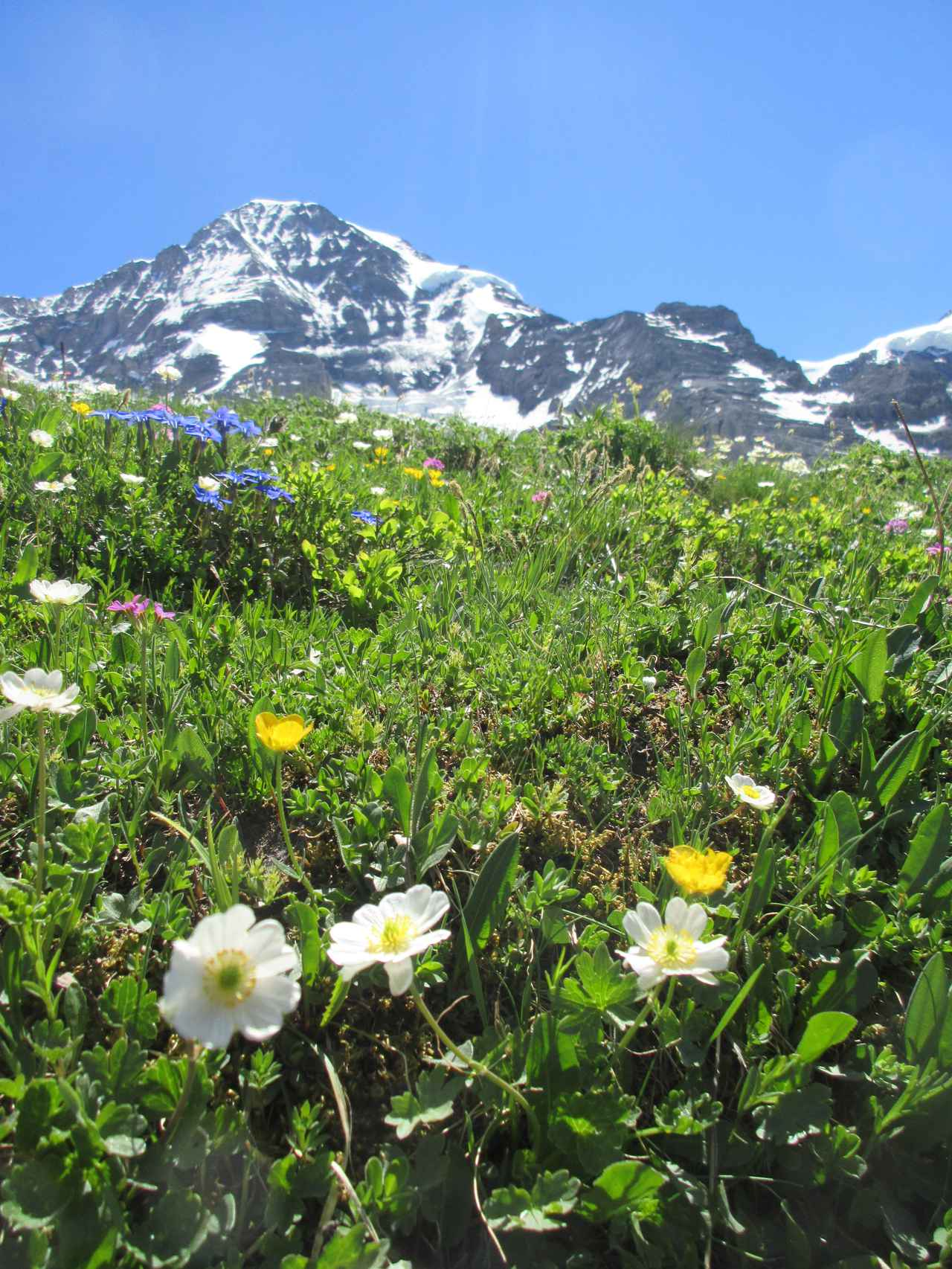 画像: 山を背景にお花畑を撮るのも素敵です!!(弊社スタッフ撮影※諸条件によりご覧いただけない場合があります)