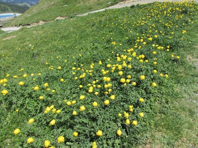 画像1: ハイキング中に見れる高山植物(弊社スタッフ撮影※諸条件によりご覧いただけない場合があります)