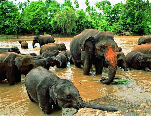 画像: 象の孤児院(スタッフ撮影)