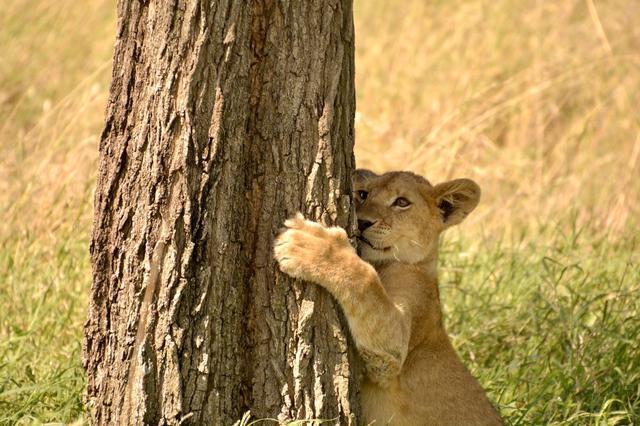 画像2: 赤ちゃんライオン