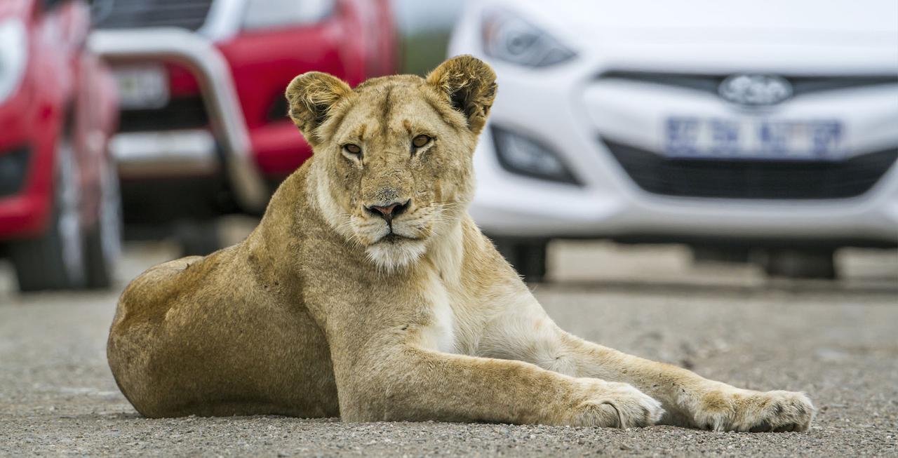 画像: Lion & Safari Park | Gauteng's Must-See Tourist Destination