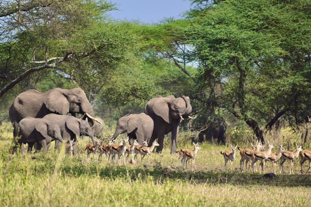 画像2: ゾウの群れ