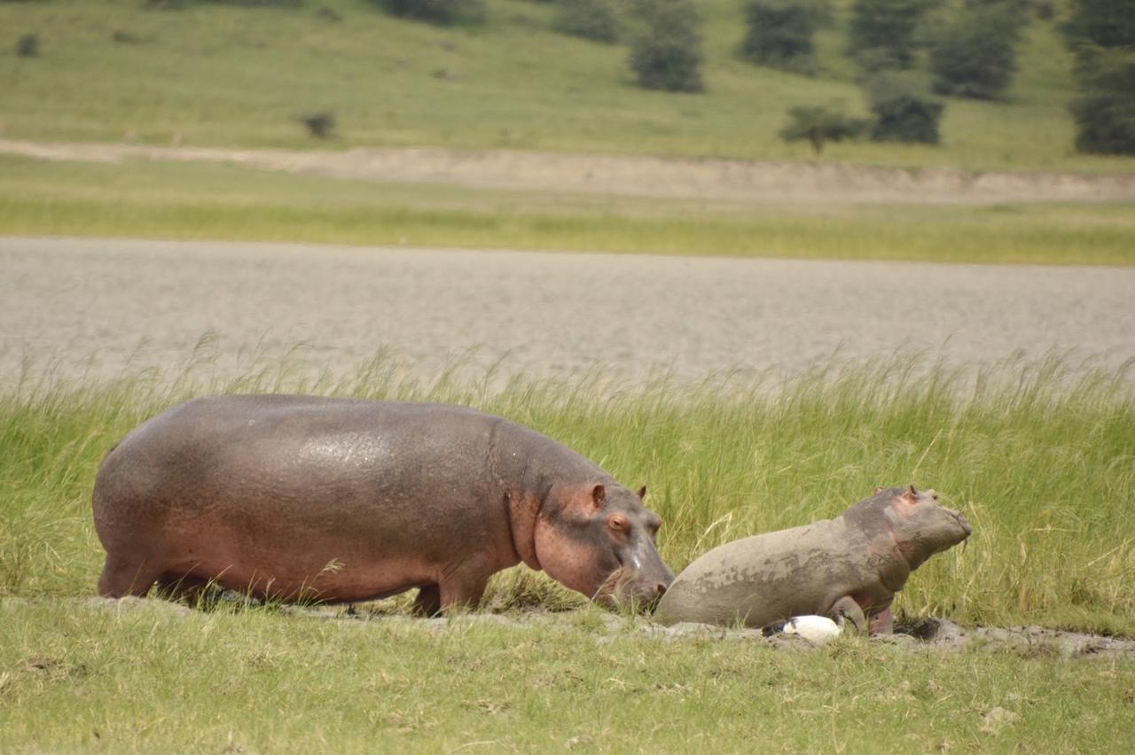 画像1: カバの赤ちゃん(タンザニア)