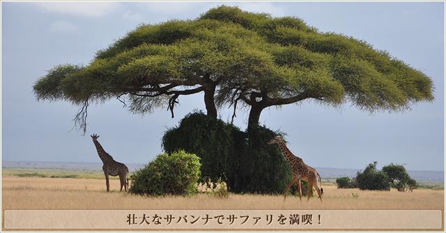 画像: サファリの楽しみ方|ケニア・タンザニア旅行・ツアー|クラブツーリズム