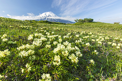 画像: 夏は多彩な高山植物を楽しむことができる(イメージ)