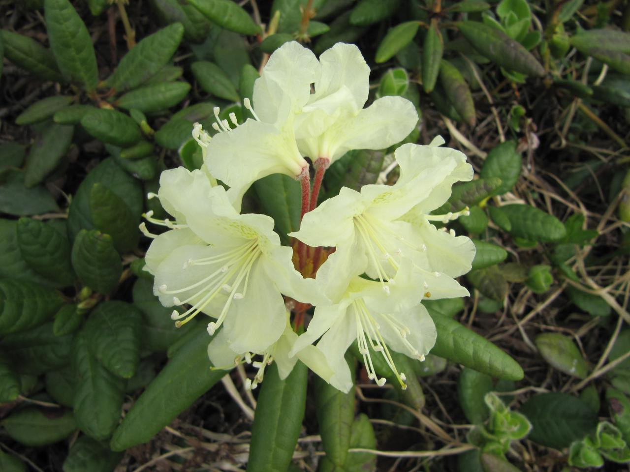 画像1: 高山植物(イメージ)