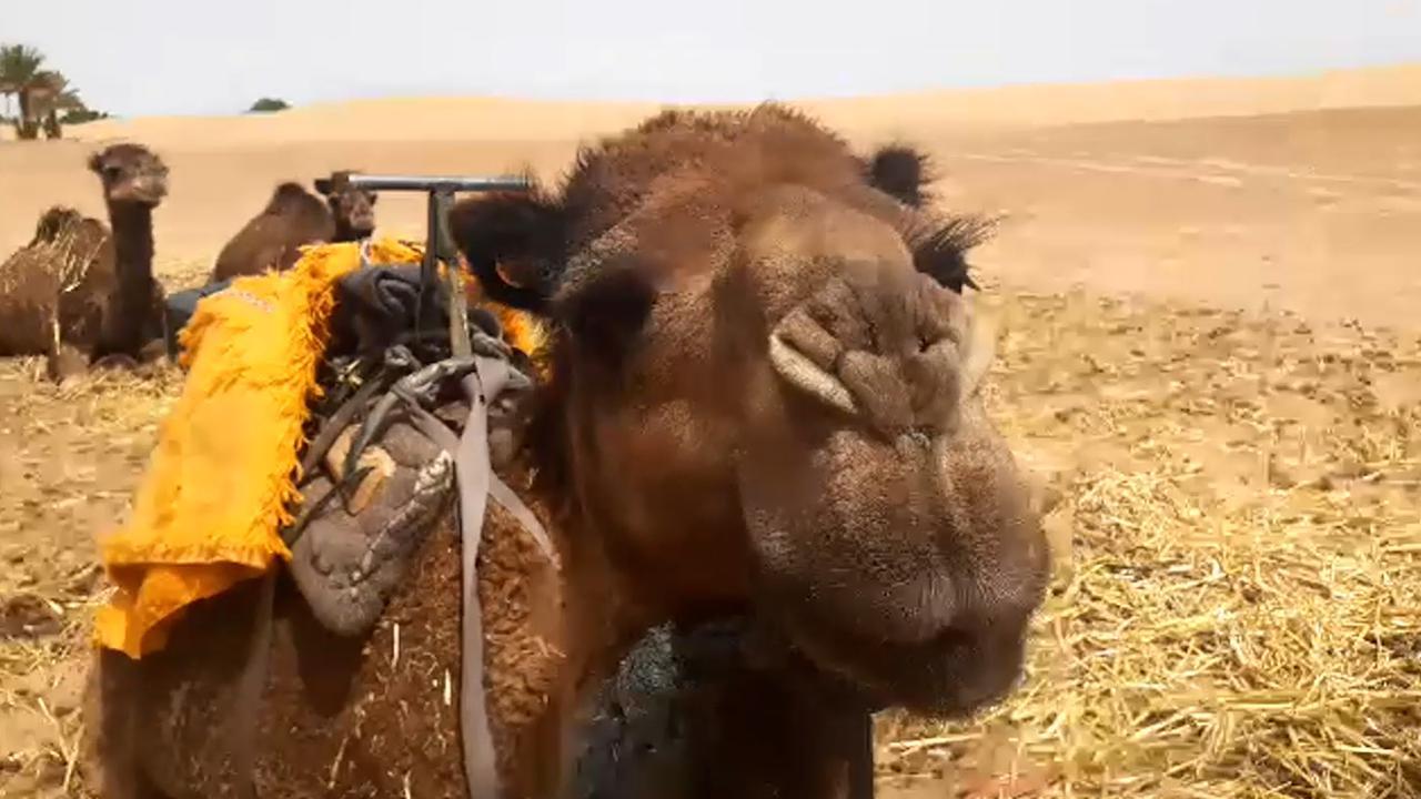 画像4: 【モロッコ】マラケシュ&サハラ砂漠から生中継♪オンラインツアーを実施しました!