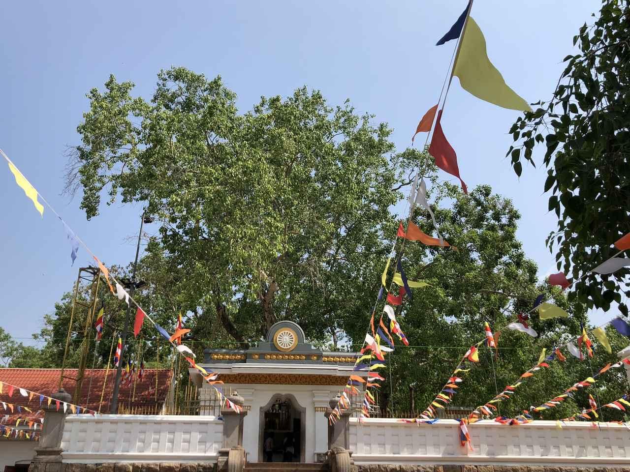 画像: 世界遺産アヌラーダプラ/スリマハ菩提樹(イメージ)