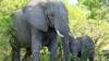 画像: 『はじめての南部アフリカ4カ国8日間』26名様限定!初めて行くアフリカ旅行にオススメ!ビクトリアの滝・喜望峰・テーブルマウンテン・サファリ体験も! クラブツーリズム