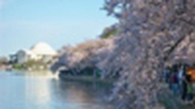 画像: 『中部空港より添乗員同行/春色に染まるアメリカ東海岸とナイアガラ8日間』 催行決定!/アメリカ東海岸からナイアガラを一筆書きのルートでめぐります|クラブツーリズム