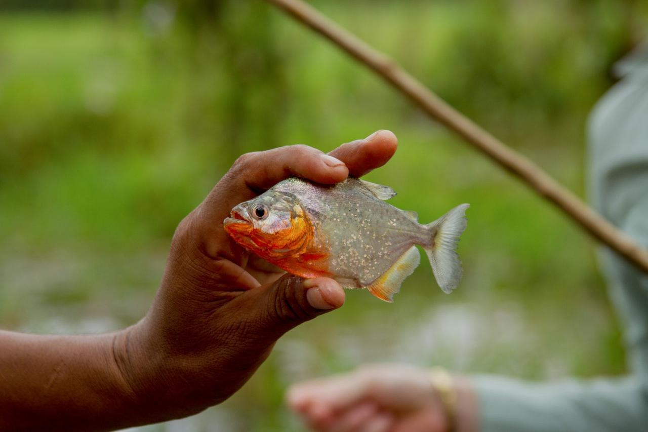 画像: ピラニア釣り体験
