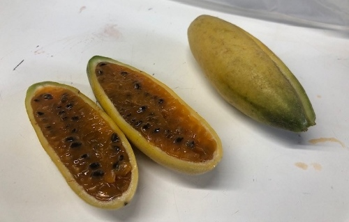 画像: バナナパッションフルーツ(見た目はバナナ、開けるとパッションフルーツ、味は・・・!?)(弊社スタッフ撮影)