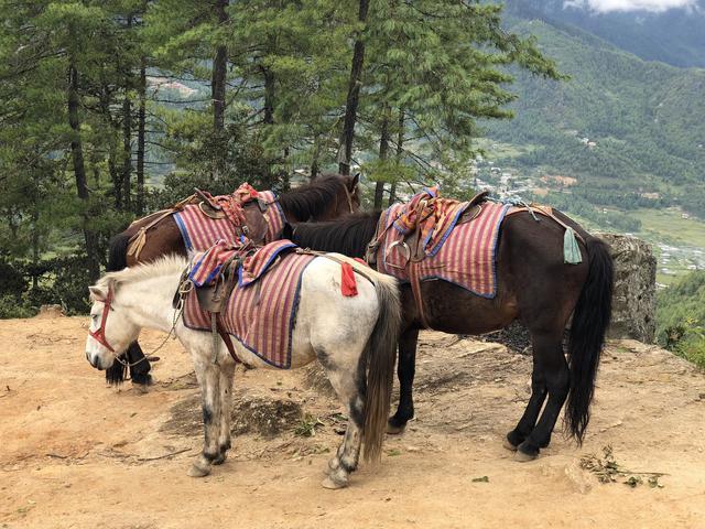 画像2: パロ タクツァン僧院への道で出会った馬(2018年9月・弊社添乗員撮影)