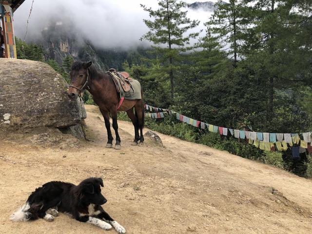 画像1: パロ タクツァン僧院への道で出会った馬(2018年9月・弊社添乗員撮影)