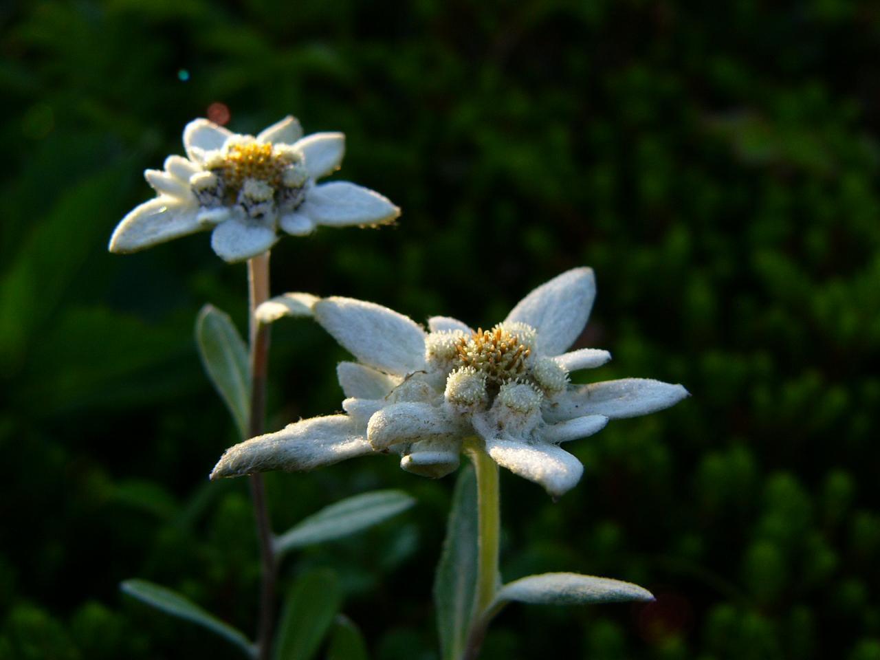 画像1: 【北海道】涼しい場所で花に癒されたい...礼文島に咲く夏の花3選