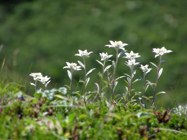 画像2: 【北海道】涼しい場所で花に癒されたい...礼文島に咲く夏の花3選