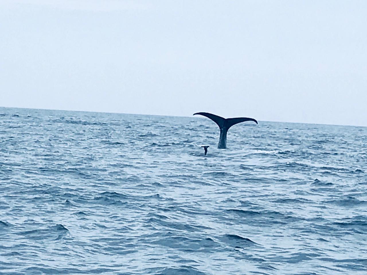 画像: 知床羅臼クルーズ 9月7日クラブツーリズム竹内撮影 地震翌日もマッコウクジラが出迎えてくれました。