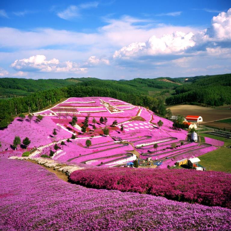 画像: 北海道の桜・芝桜・チューリップツアー・旅行 クラブツーリズム
