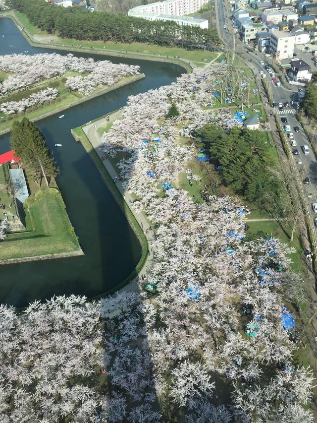 画像: 昨年4月29日の五稜郭!