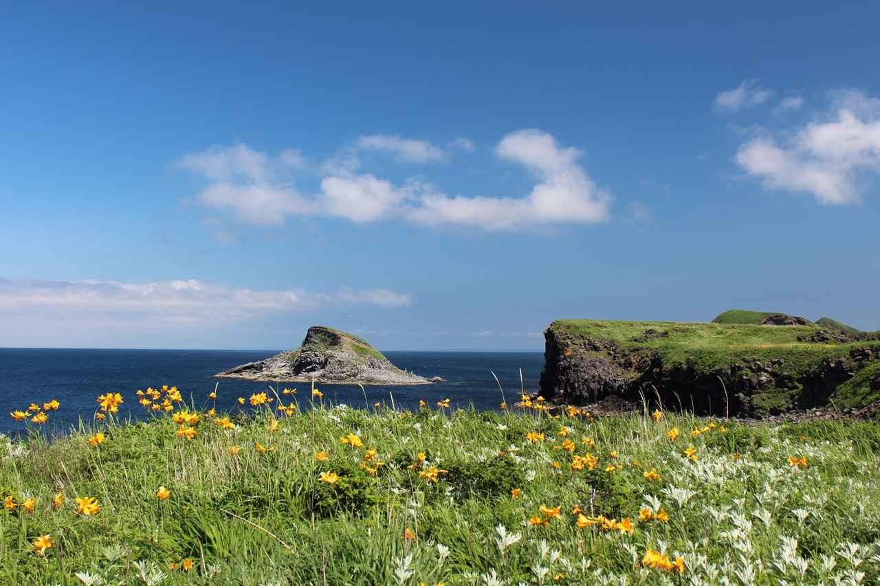 画像: 利尻島・富士野園地(お客様撮影写真:矢野一馬様・神奈川県在住)