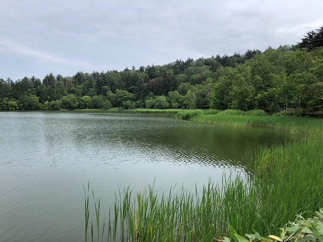 画像: 沼周りの木道を一周「姫沼」