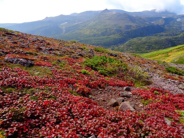 画像: 山頂付近の写真(9/3撮影提供:黒岳ロープウェイ)