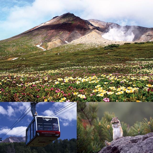 画像: 夏 の旭岳は高山植物の楽園♪運が良ければ小動物もみられるかも!?