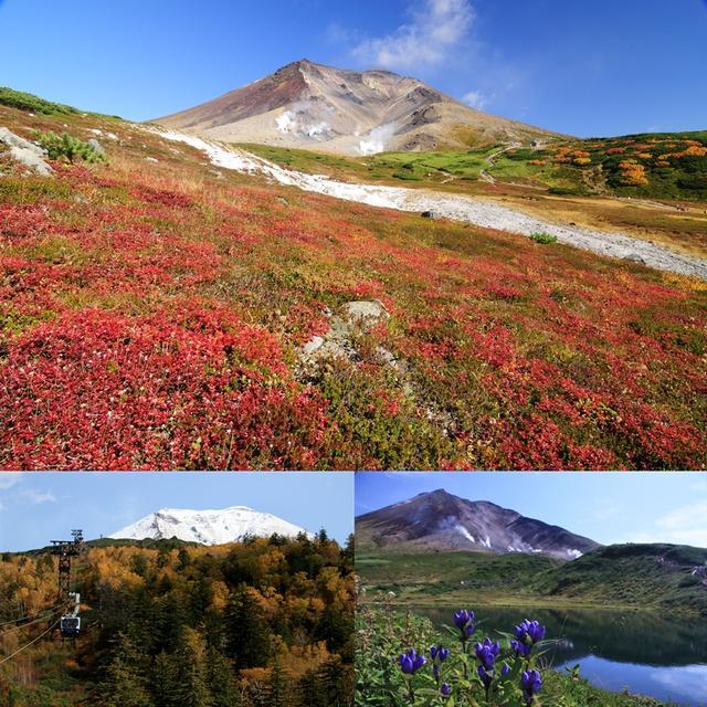 画像: 秋 の旭岳はまた鮮やかに装いを変えます。右下の花はエゾオヤマリンドウ(9/5現在、すでに開花も確認されています)