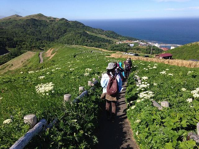 画像: ハイキングならこのコース!『礼文島に2連泊 花名所3カ所へご案内。島に50回以上行った花に詳しい添乗員がご案内 利尻島・礼文島の花々を満喫する旅4日間』|クラブツーリズム
