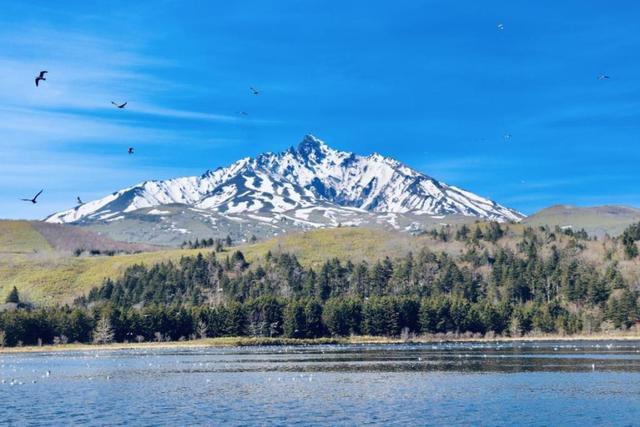 画像: 『春がやってきた!利尻島・礼文島 3日間』 春の芽吹きを感じることができる季節に!グルメも観光も温泉も!気軽に3日間! 5月9日以降はミニハイキング|クラブツーリズム
