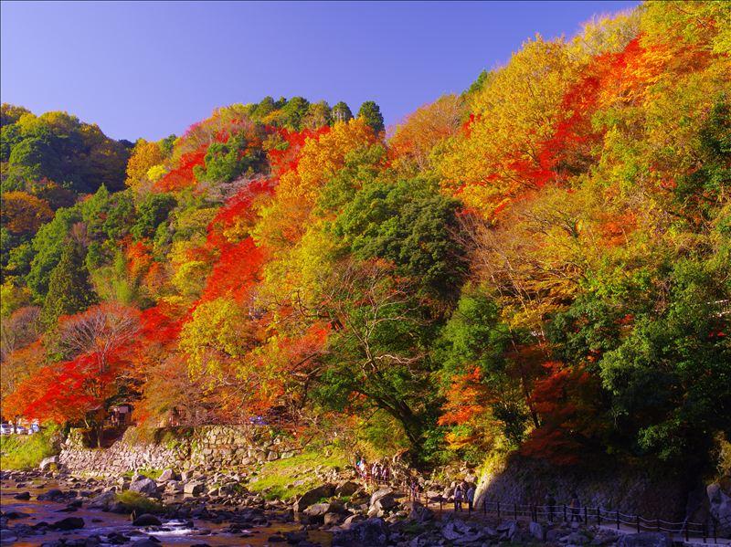 画像: 香嵐渓(イメージ※写真をクリックすると、香嵐渓ツアー特集ページへ遷移します。) ※2018/08/23~8/29の間、ご予約が多かったツアーでご案内する紅葉名所です。 www.club-t.com