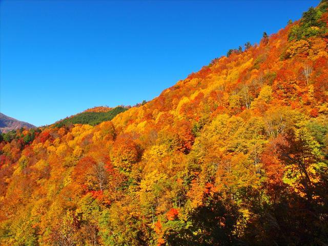 画像: 紅葉の秋山郷(お客様が撮影された写真:東京都在住 PN:ken様の作品 ※写真をクリックすると、秋山郷ページへ遷移します。) www.club-t.com