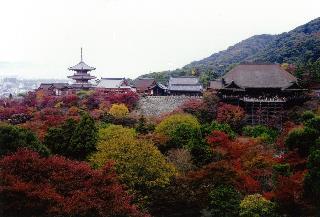 画像: <オンライン説明会>『京都の紅葉説明会』16:00~16:30 クラブツーリズム