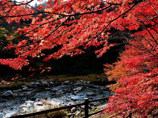 画像: 秋の紅葉ツアー・旅行2021【東京23区発列車・飛行機ツアー】│クラブツーリズム