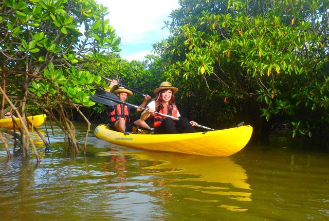 画像: マングローブ カヌー体験