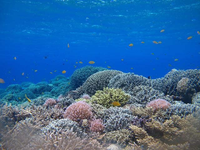 画像: 沖縄の海のサンゴ礁