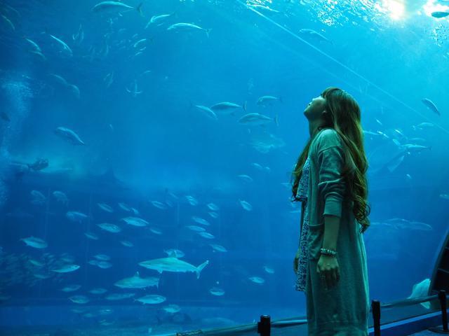画像: 沖縄美ら海水族館の大水槽をじっくり間近で観察(イメージ)