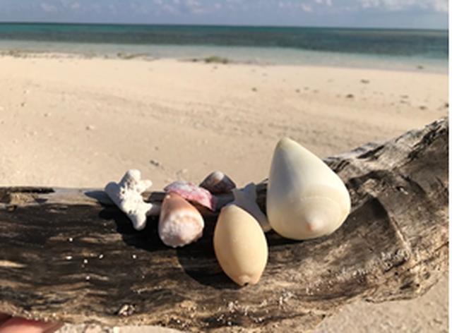 画像: はての浜(拾った貝殻と砂浜)