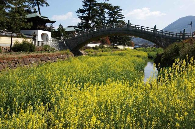 画像: 第75番 善通寺 弘法大師・空海の誕生地です(菜の花の見頃は例年3月中旬)