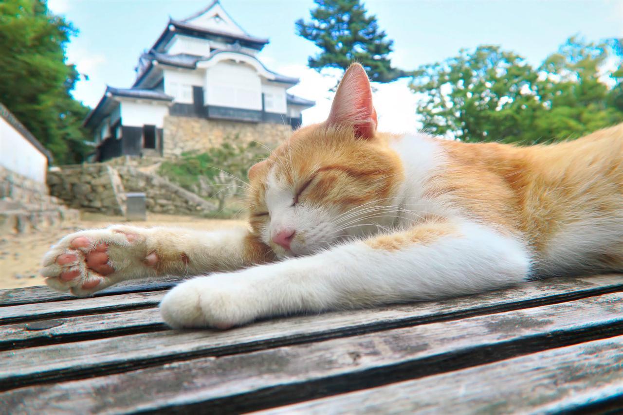 画像: さんじゅーろー 写真提供:岡山県観光連盟 (イメージ)