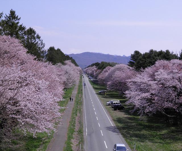 画像: 静内二十間道路(しずないにじっけんどうろ)※イメージ