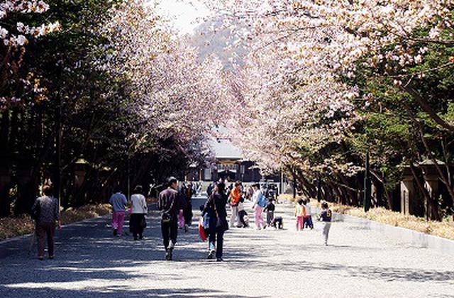 画像: 北海道神宮※イメージ