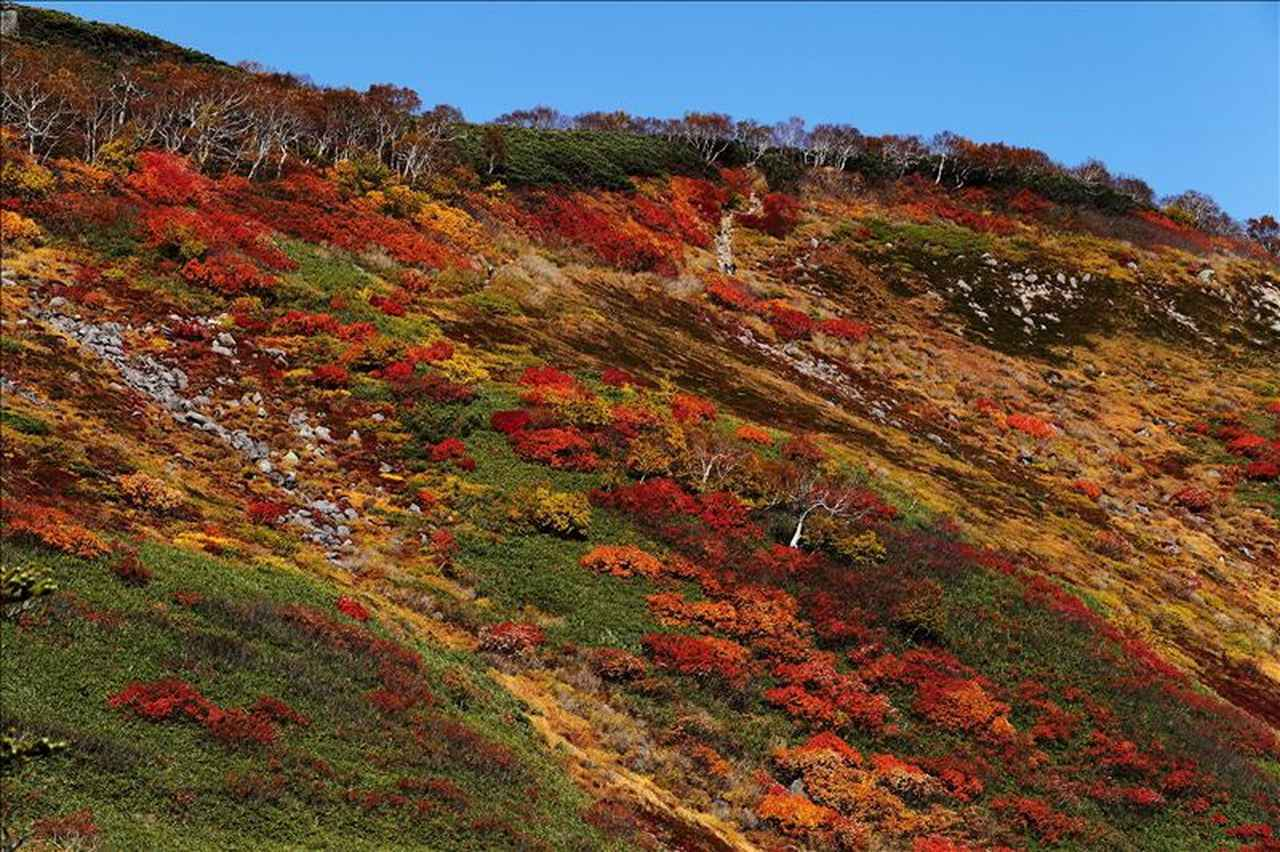 画像: 日本一早い紅葉(北海道・大雪山赤岳・銀泉台)お客様写真:千葉県在住・PN:photolove555