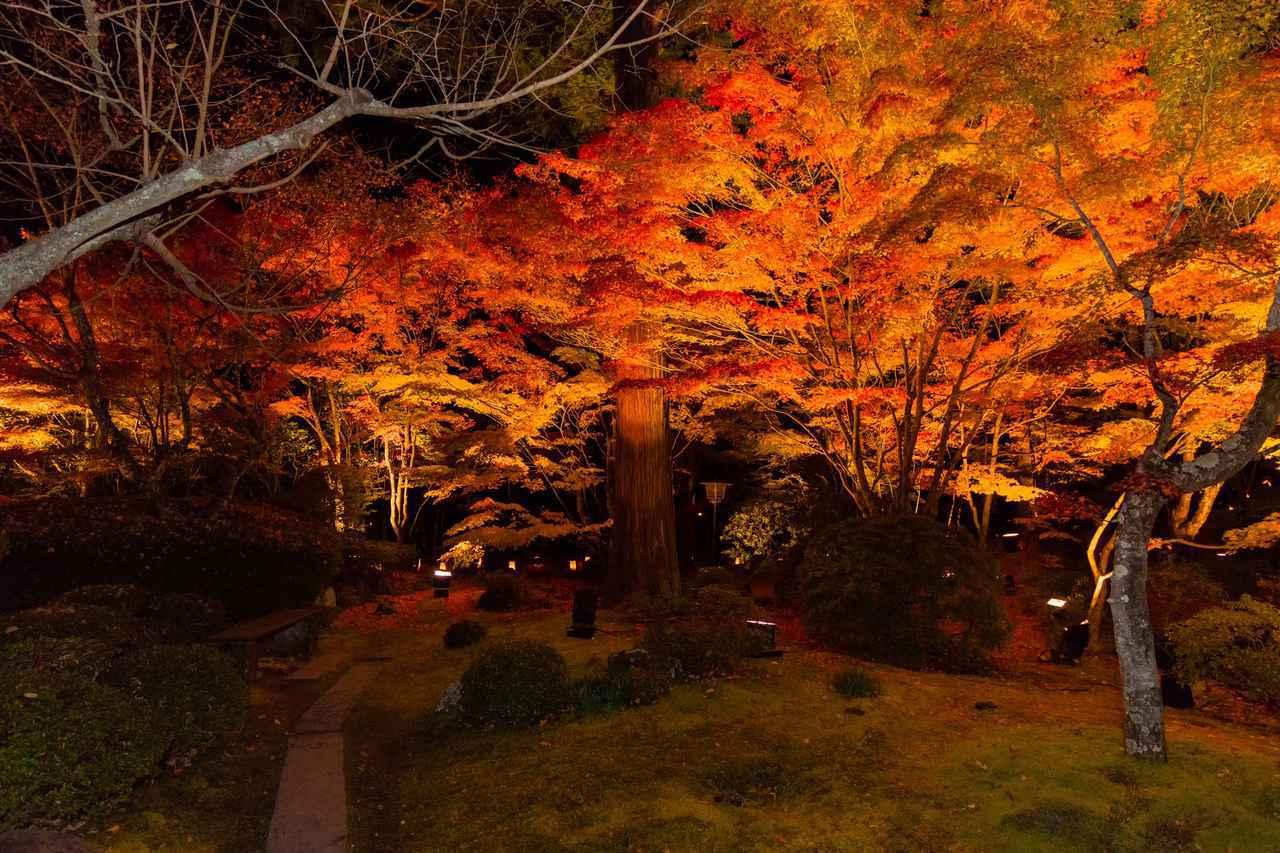 画像: 紅葉でライトアップされた松島円通院