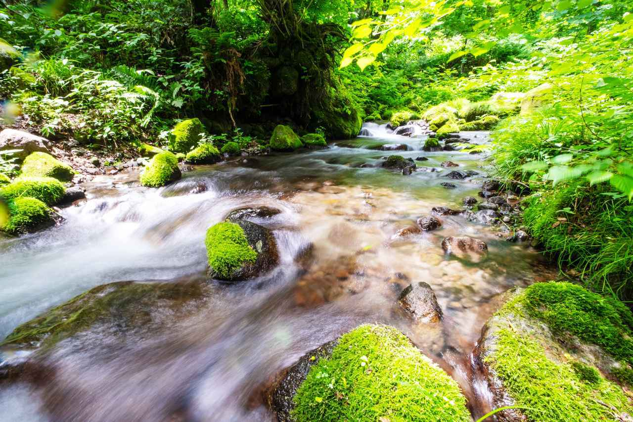 画像: 木谷沢渓流