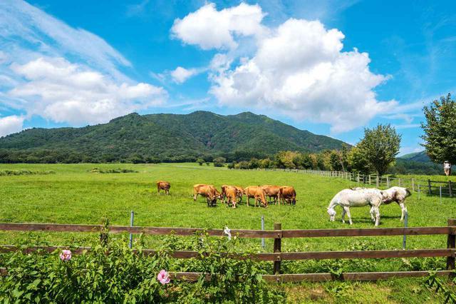 画像: 蒜山高原