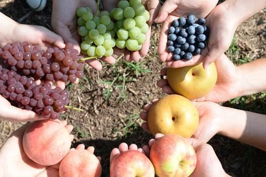 画像: フルーツ狩り(イメージ※桃は時期外のため収穫できません)