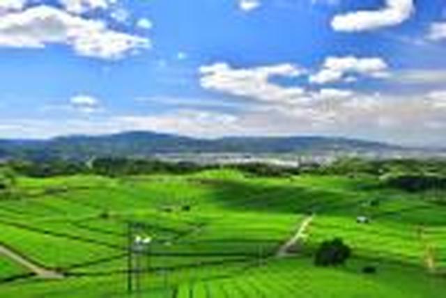 画像: 【3/21出発決定】<ハイキング初級>『九州オルレ 八女コース」~香り高き絶景の茶畑と古代文化をめぐる~ 日帰り』【博多・小倉出発】|クラブツーリズム